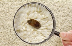 как избавиться от вредителей в ковре