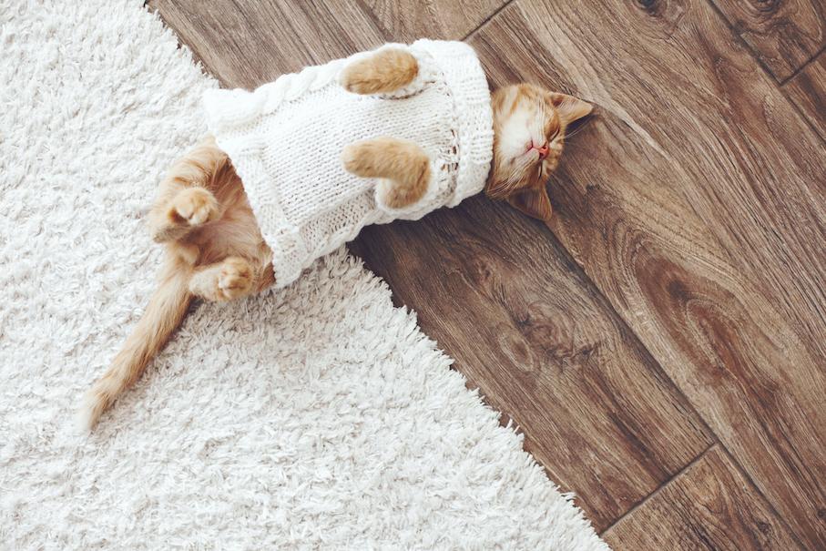 Как справиться с шерстью в квартире с кошкой или собакой